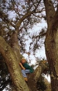 Boy in tree (c) ArtToday - All rights reserved.